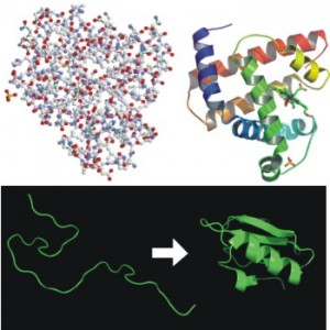 Protein-Folding-300x300